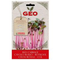 Lombarda red cabbage germinar geo - 12g - Biocop