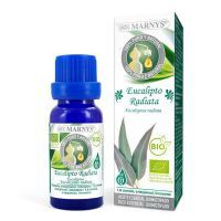 Eucalyptus radiata - 10ml
